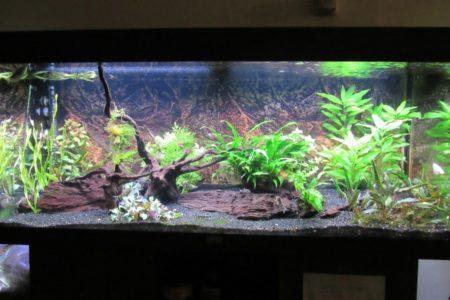 Tussentijdse update. Plantjes groeien goed!
