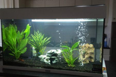 2e aquarium