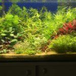 Aquarium met 9 soorten planten