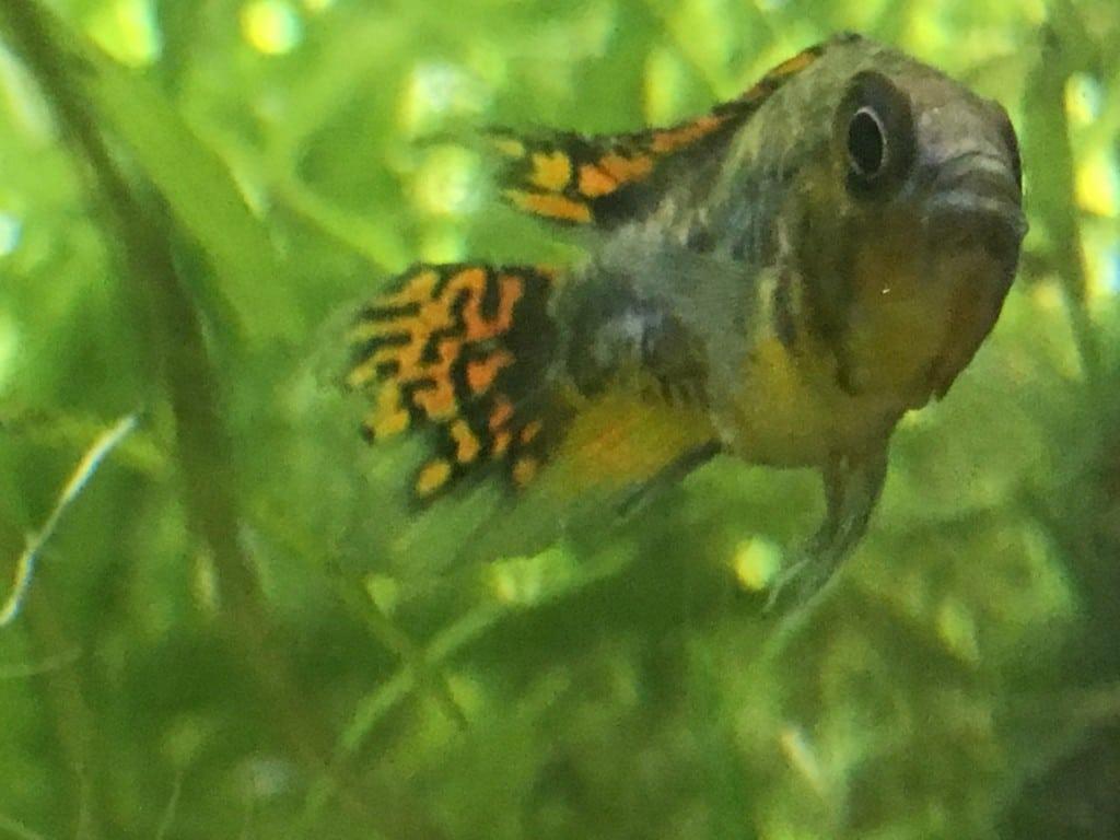 Ik vind dit zelf 1 van de mooiste vis soorten