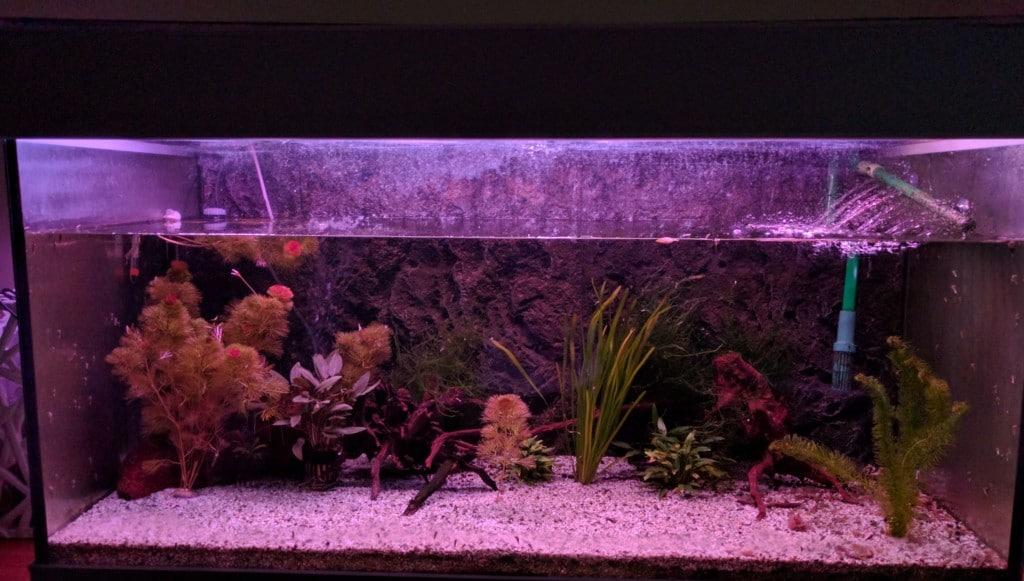alleen rood licht voor planten groei