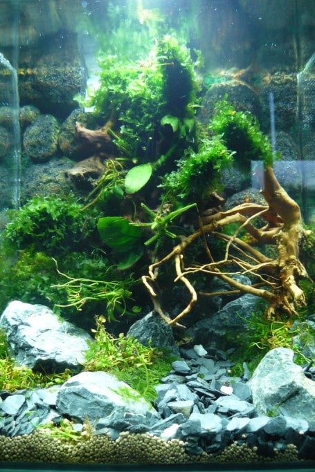 Eerste project aquascape