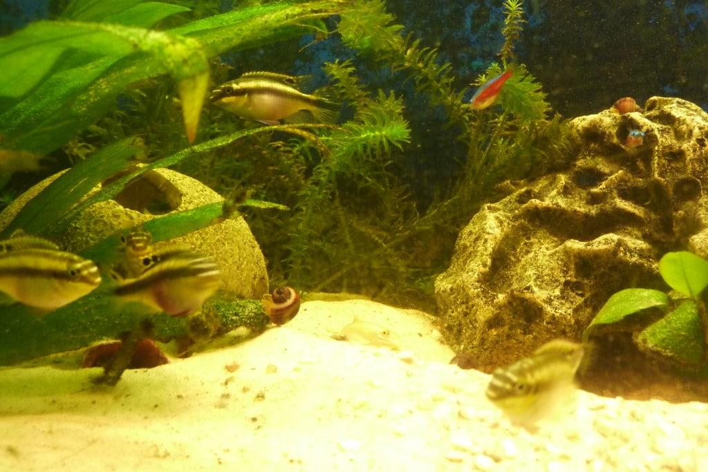 Gezelschaps aquarium
