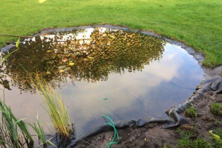 Diepere gedeelte van de vijver met zuurstofplanten en waterlelies.