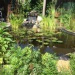 Alweer een tijd geleden, nu ziet het er zo uit, veel planten bij gezet, een waterval/beekloopje toegevoegd en hij ziet er mooi helder uit.