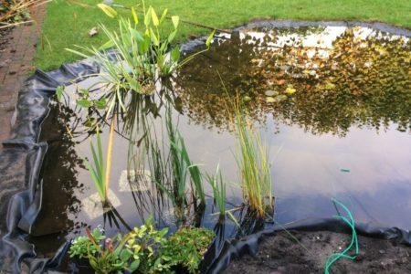 Minder diepere gedeelte met moeras- en oeverplanten.