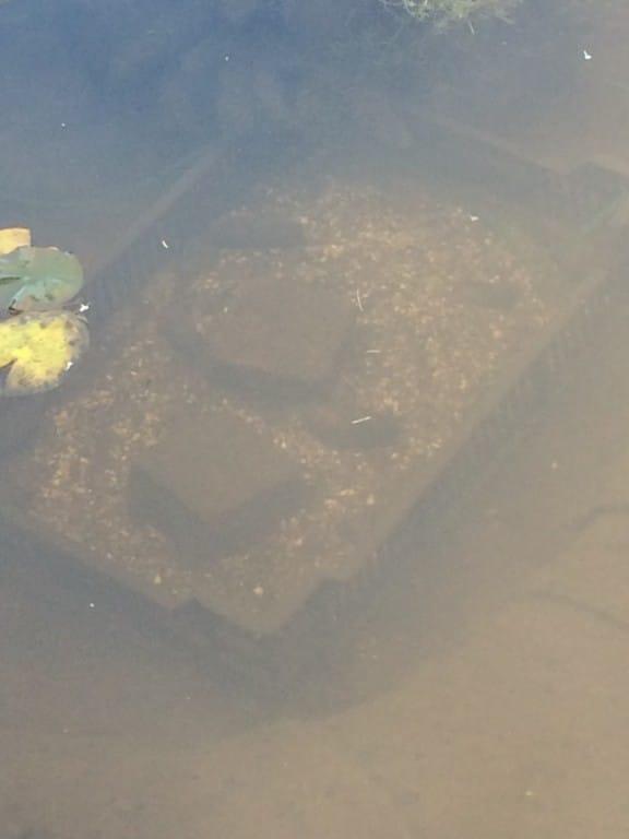 Mosselen in een bak met zand, grind en twee stenen.