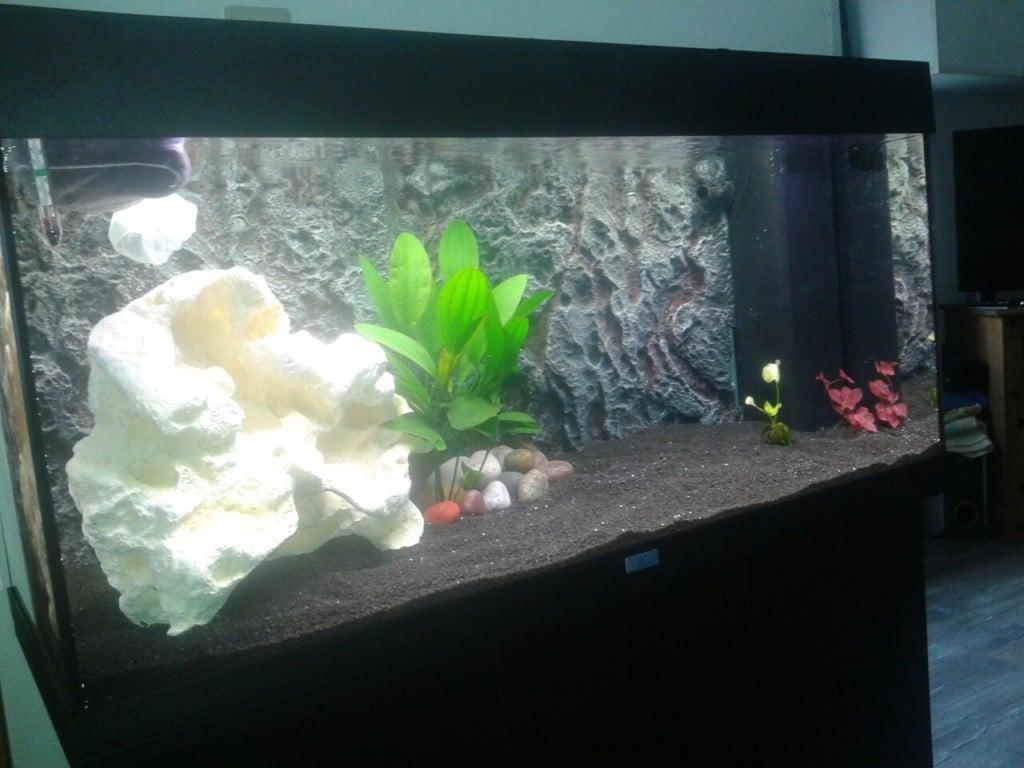 de grondslag van het aquarium gelegd