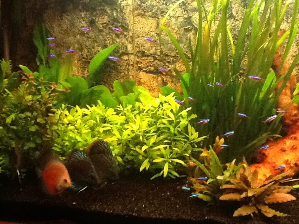 Dit mijn aquarium