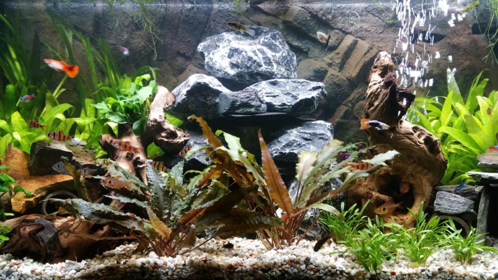 Aquarium 12 11 2016 4