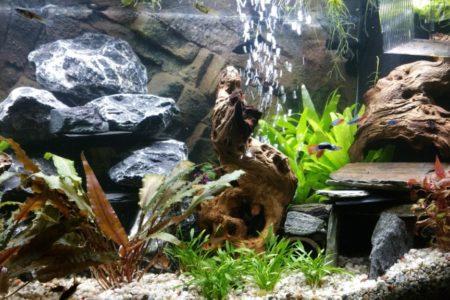 Aquarium 12 11 2016 5