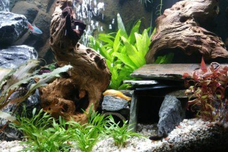 Aquarium 12 11 2016 6