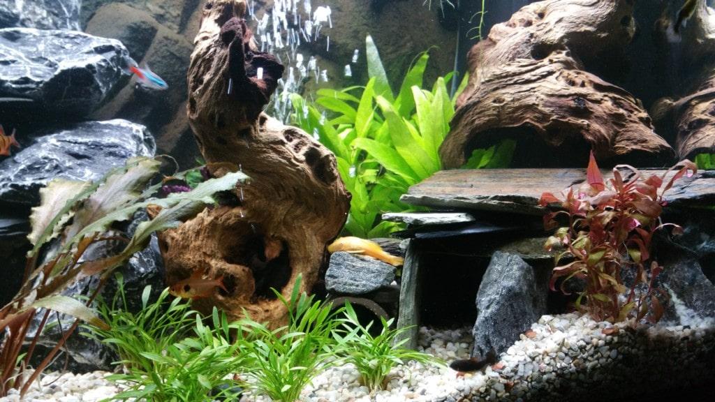 Aquarium 12-11-2016