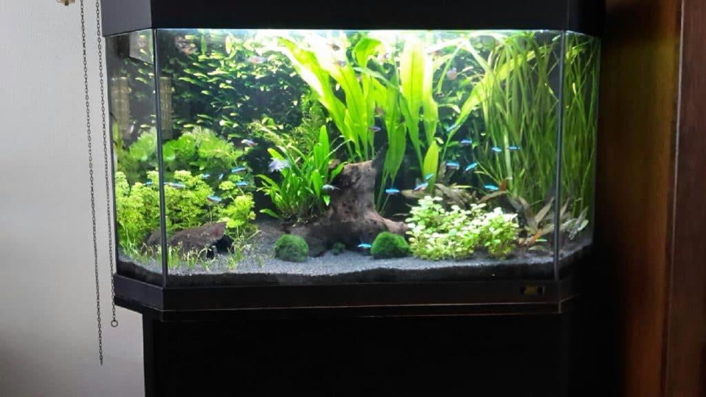 Mooi en genoeg planten en vissen