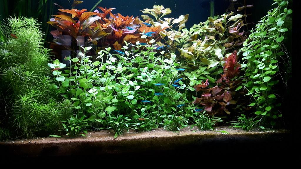 Hoe planten kunnen uitgroeien.
