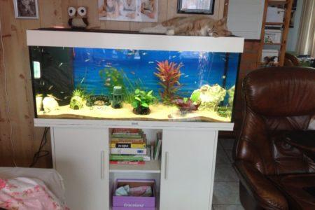 Nieuw groot aquarium 1