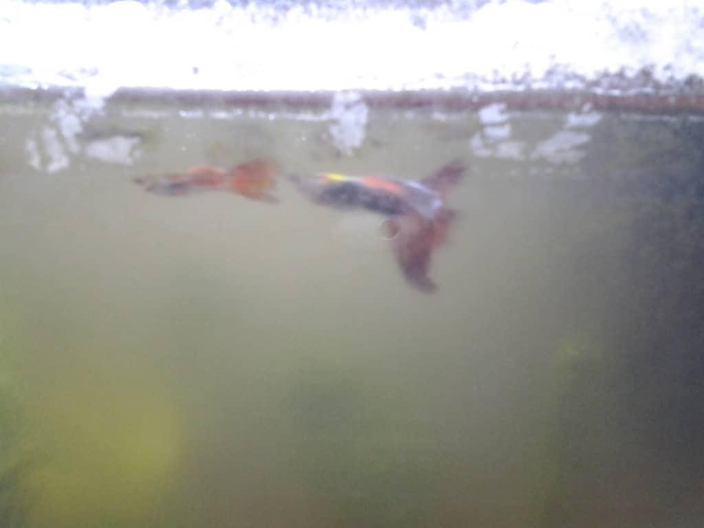 twee visjes uit mijn aquarium