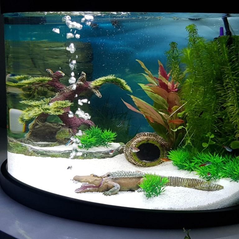 het onderwater leven met luchtbellen krokodil.