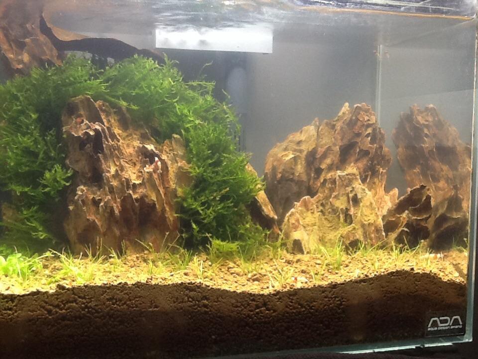 Je ziet  dragon stone op bijzondere manier in combinatie met naald gras en java mos en nog een soort cuba die geen co2 nodig heeft