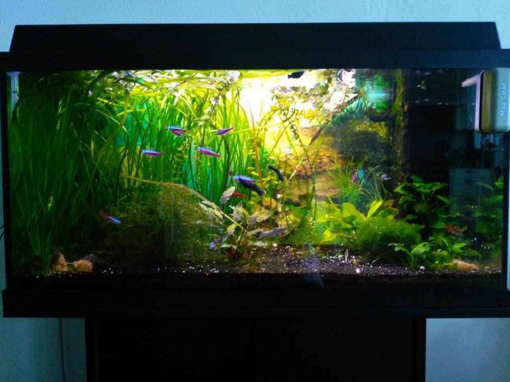 Marks aquarium