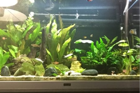 Dit is mijn mooie hobby vol planten en vissen.