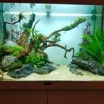 Vissenbestand toegevoegd, kleine wijzigingen in plantenbestand.