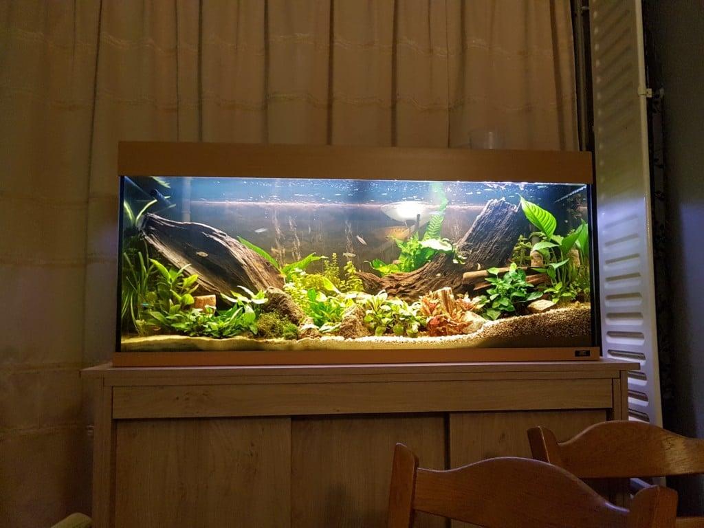 Heb ongeveer 35 planten en 2 externe filters van jbl greenline.  Gezamelijk goed voor 1400L per uur