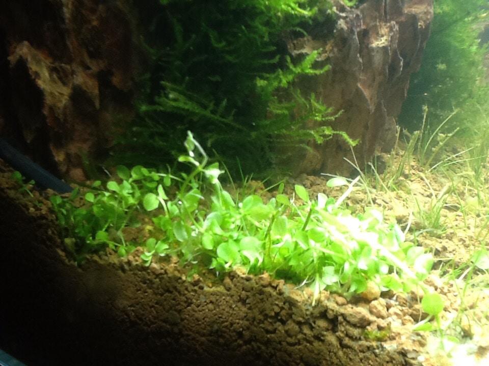 Groen en fris snelgroeiende plant