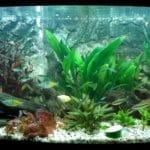 mijn gezelschaps aquarium