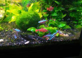 op deze foto's zijn mijn meeste vissen te zien, rondom de beplanting,