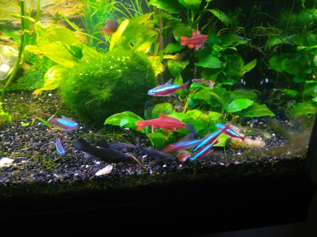 vissen rondom beplating