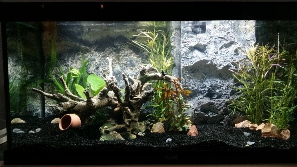 Modern open Aquarium