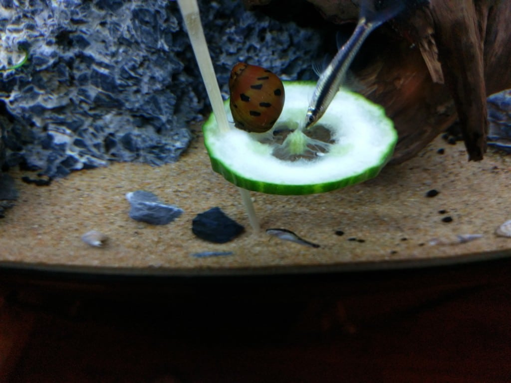 Vissen en slak