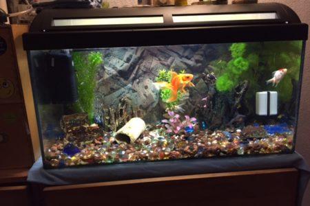 beginners aquarium