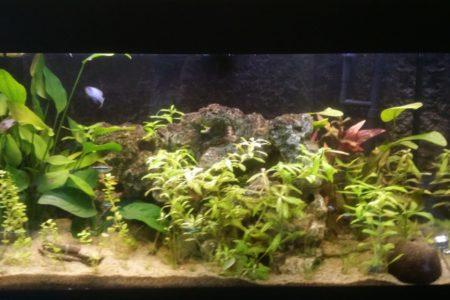 Aquarium na opstarten met vissen erin
