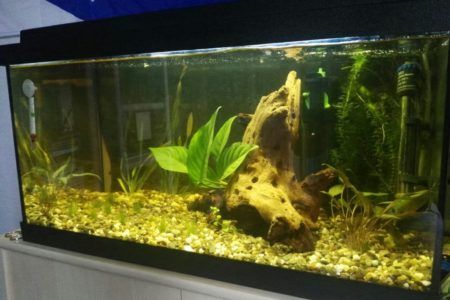 Dit is mijn aquarium