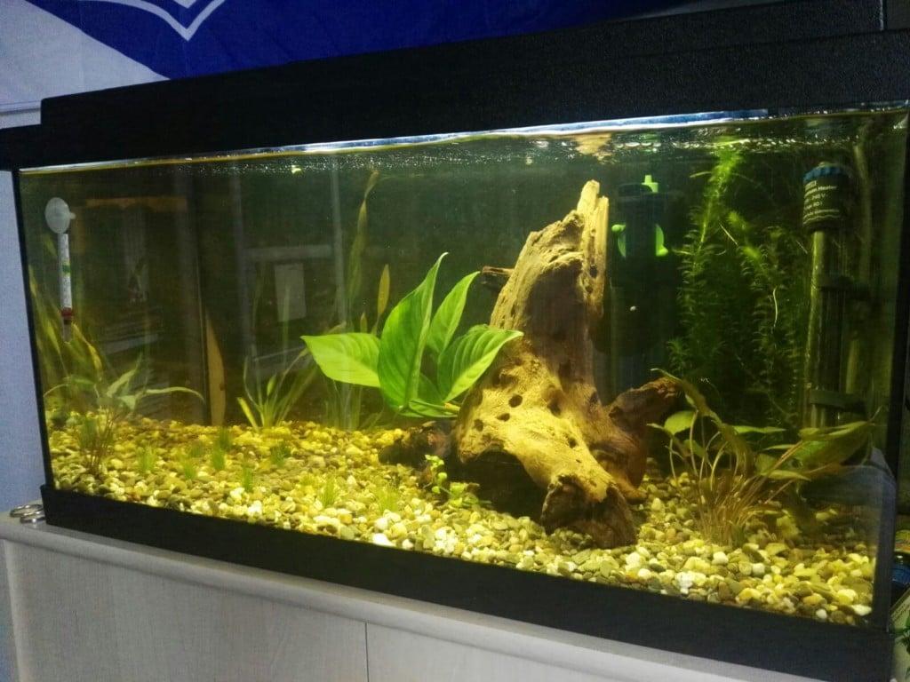Dit is mijn aquarium.