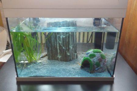 Het aquarium zelf 1