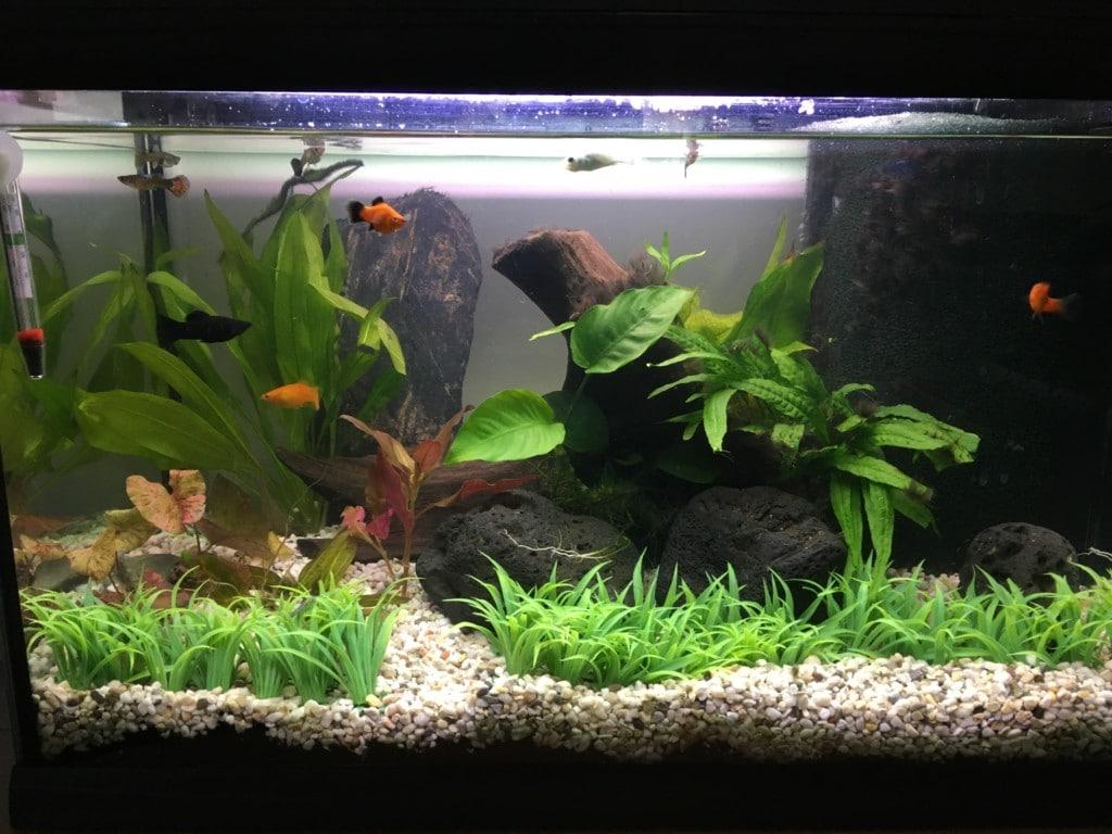 mijn aquarium cayman 60 professional