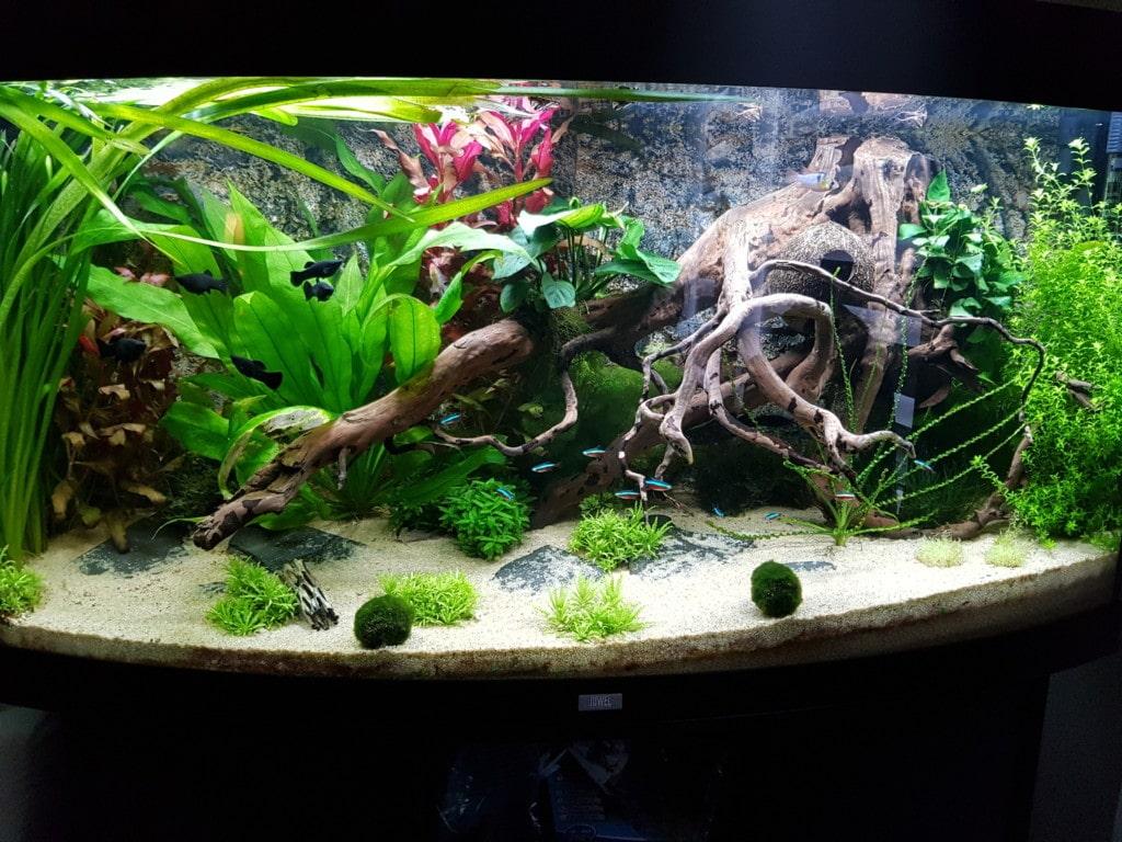 Het aquarium.