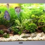 Aquarium closup