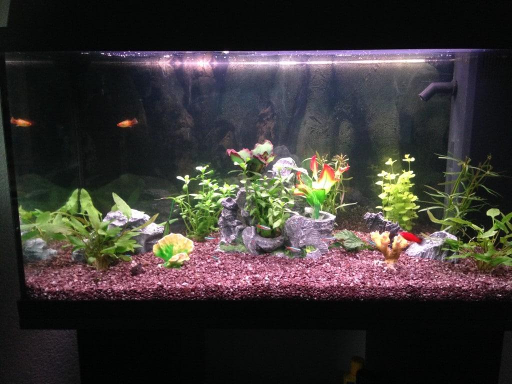 Aquarium moest hier zijn balans nog vinden. Veel visjes zijn dood gegaan helaas.