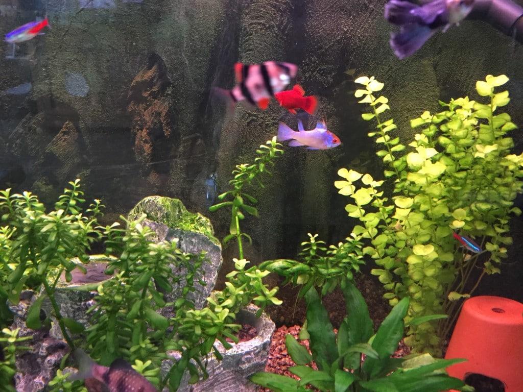 Onze mooie kleurige visjes