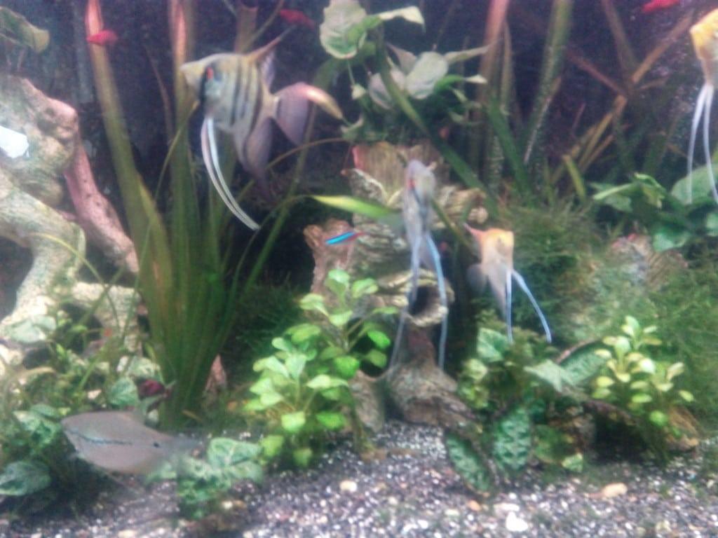 Verschillende vissen