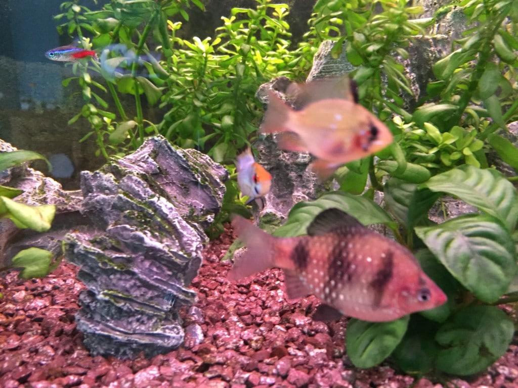 Prachtige visjes....we hebben nu 2 variaties, maar willen er nog meer van met veel kleuren.