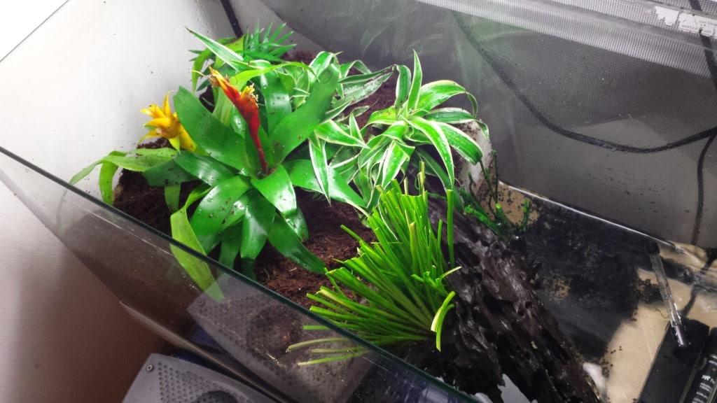 beplanting