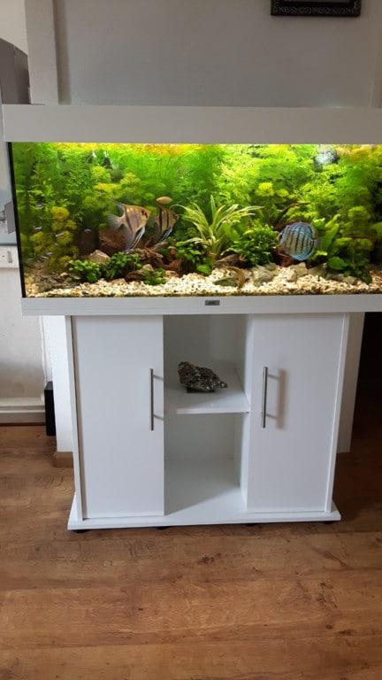 Aquarium met bijpassende onderkast