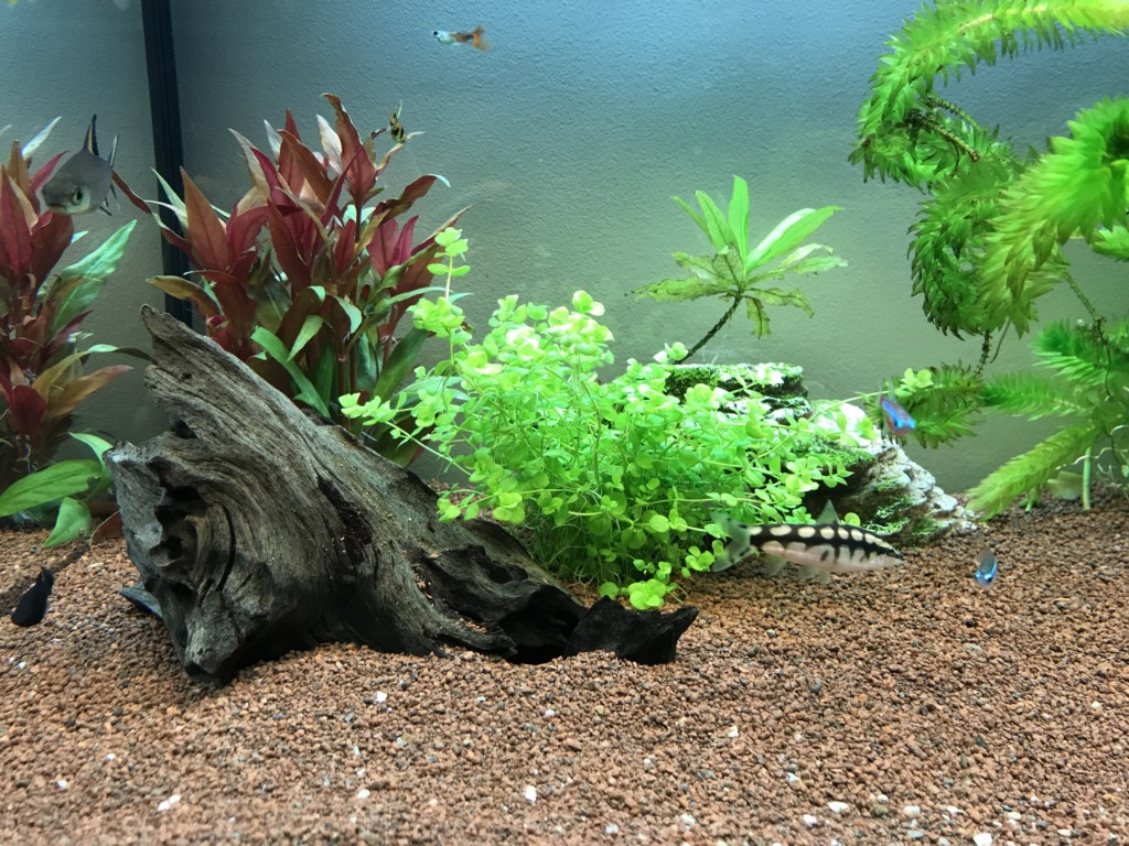 Aquascape 1
