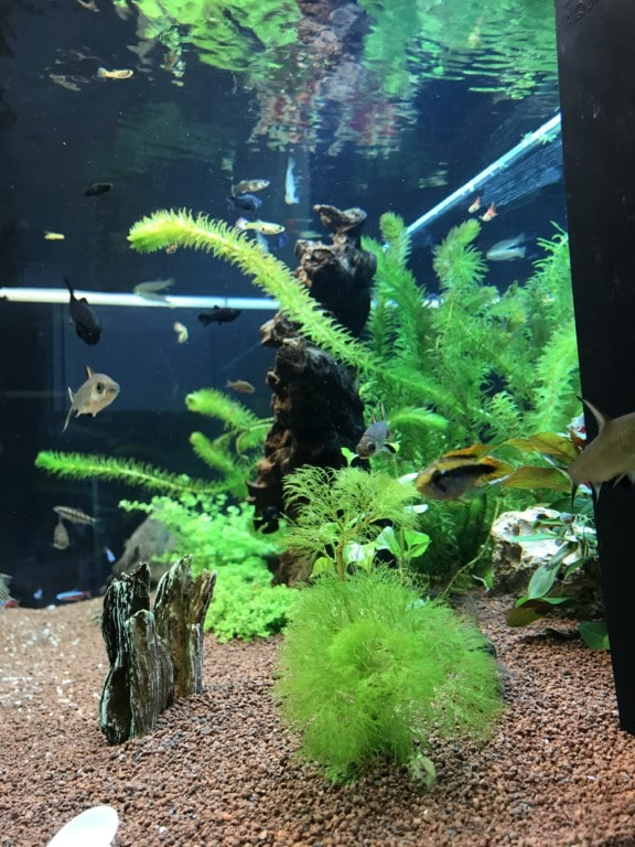 Aquascape 3