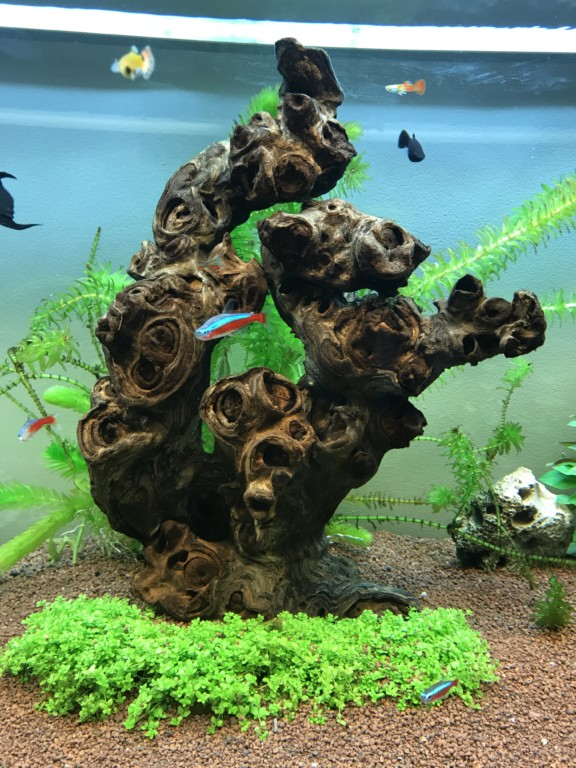 Aquascape 4